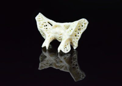 2016 sphenoid sculpture by amy karle 2 d 3d print bioart sculpture reality capture generative art algorithm art biology technology top 3d print artist bioartist skull bone