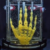 Bringing bones to life: Artist prototypes a hand grown out of stem cells