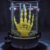 Regenerative Reliquary by Amy Karle